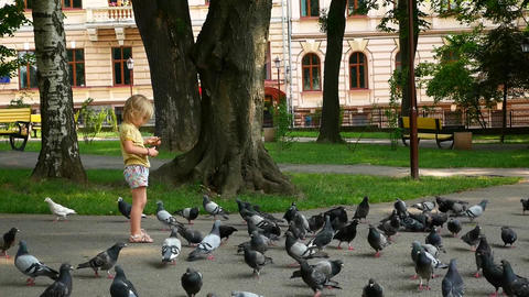 The child feeds the pigeons. Pigeons eat, the child looks at them Live Action