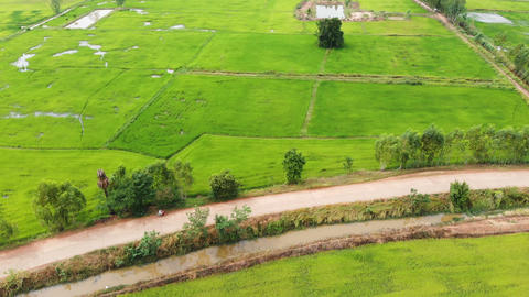 Drone shot aerial view of fresh and green nature agriculture rice field Archivo