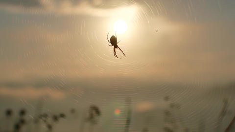spider on web sunset backlit time lapse sun goes down 4k Footage