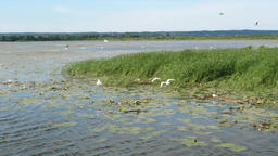 Birds reserve on Druzno Lake, Elblag, Poland Live Action
