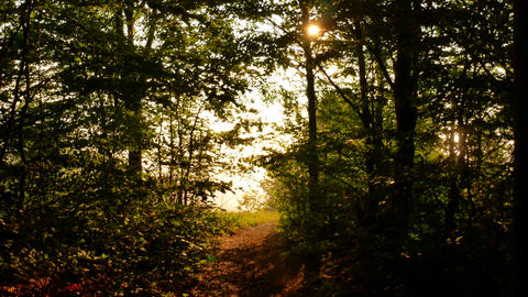 beautiful autumn forest with sun shining - dolly shot Footage