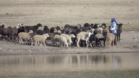 Shepherd Footage