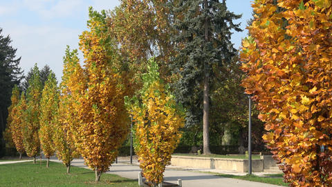 Beautiful autumn park. Autumn trees and leaves. Autumn Landscape.Park in Autumn Live Action