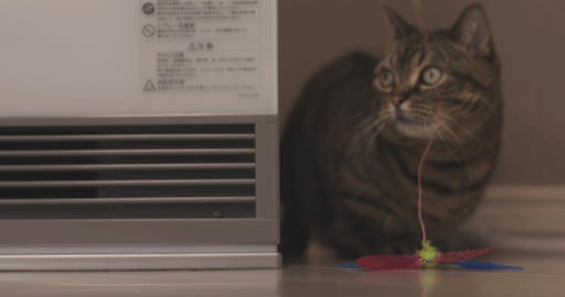 Cat escapes from toy in living room close shot ライブ動画
