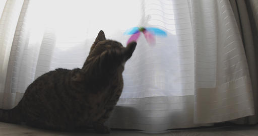 Playing cat near the window ライブ動画