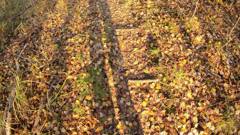 Shadows of walking feet on path with autumn leaves Live Action