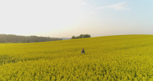 Farmer Using Digital Tablet on Field During Sunset Footage