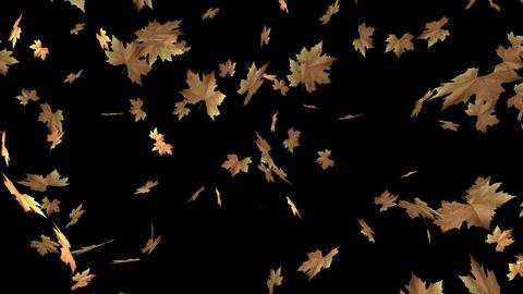 Autumn Leaf Transition Animation
