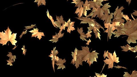 Autumn Leaf Transition Animation