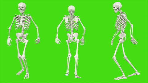 Skeleton moonwalk. Seamless loop animation on green screen Animation