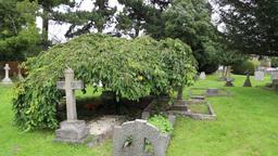 Graveyard at St Nicholas Church Chislehurst Kent UK Footage