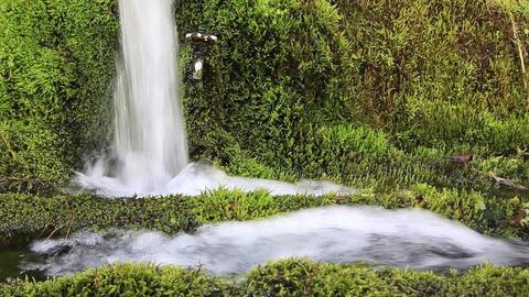 湧き水 Footage