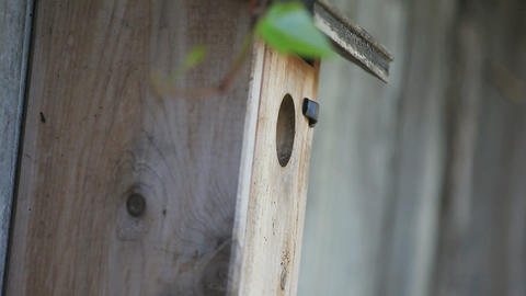 Songbird enters and leaves nest box on fence Footage