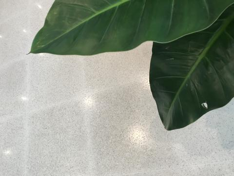 green leaves plant and white marble tile background Photo