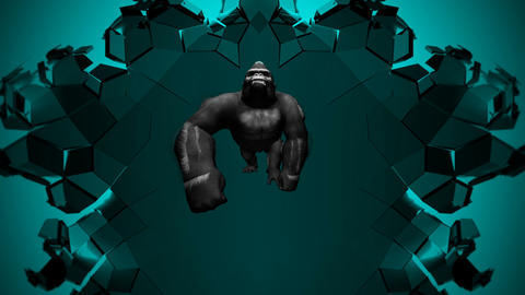 Gorilla Colorful Trio Center Dark Background Strobe VJ Loop Footage