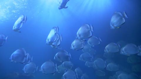 Fishes swimming in the aquarium Live Action