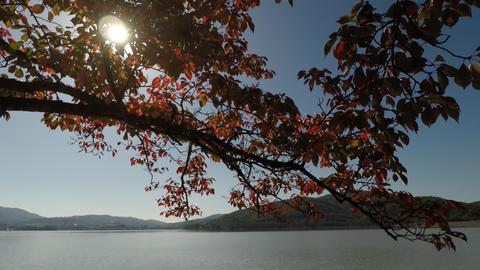 Gyeongju lake Footage