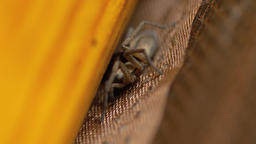 Small brown spider, close-up Live Action