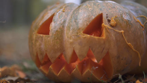 Halloween. Scary halloween pumpkin Live Action