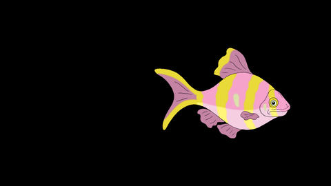 Rose-yellow striped Aquarium Fish Alpha Matte looped CG動画素材