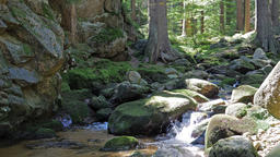 Magical, wild forest with a pure water in a brook. Biosphere reserve Footage