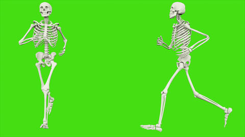 The skeleton runs. Seamless loop animation on green screen Animation