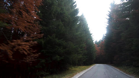 Driving through woods in autumn ビデオ