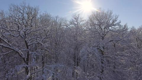Winter Forest in Snow. Christmas or New Year time Photo