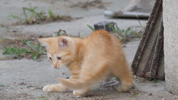 Little, ginger, funny kitten is chasing its own tail Footage