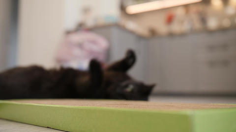 Big black cat enjoys his new scratch board. Cat and... Stock Video Footage