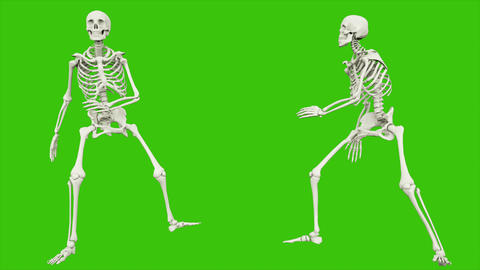 Skeleton walk. Seamless loop animation on green screen Animation