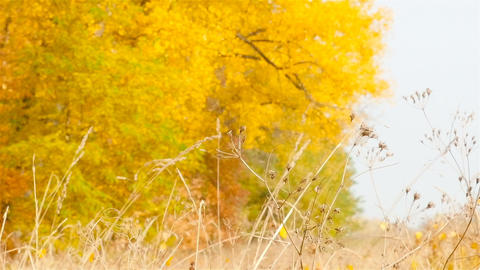 Autumn fallen leaves. Blurred Background. Slow motion ライブ動画