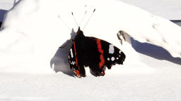 Red admiral butterfly on white ground Footage