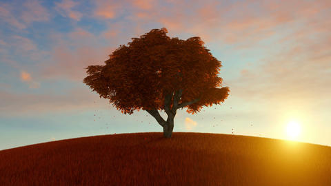 Alone Autumn Tree On Hill Animation