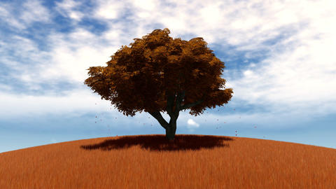 A lonely autumn tree on a field 애니메이션