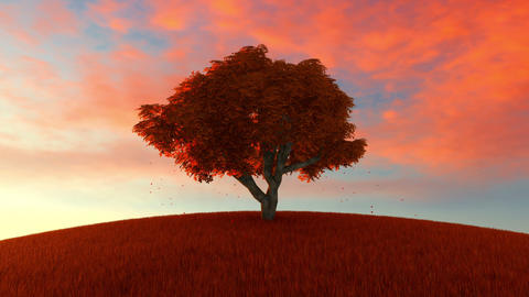 Lonely beech tree on a hill of mountain in the autumn landscape Animation