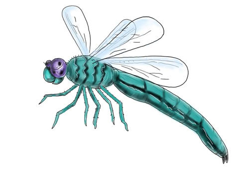 Dragonfly Flying Color Drawing 2D Animation Animation