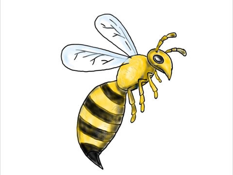 Honeybee Flying Drawing Color 2D Animation Animation