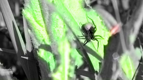 Spider And Grass stock footage