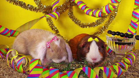 Sylvester animal pet animals pets cute new year s eve party Live Action