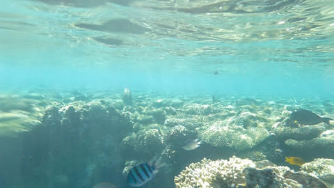 Coral Reef With Fishes And Sunrays Footage