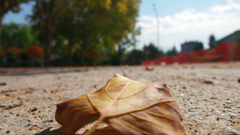 A dead leaf on the floor, in a park 영상물