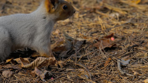 Squirrel eating sunflower seeds Footage
