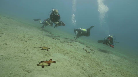Group of scuba divers swimming under sea water and watching seastars on bottom Footage