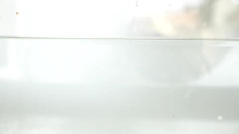 Falling Fresh Organic Tomatoes Stock Video Footage