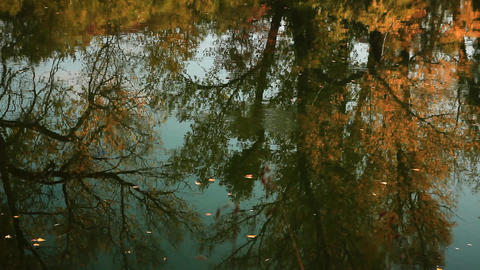 Fallen leaves float on the autumn river reflecting trees with yellow foliage GIF
