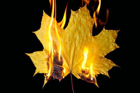 Burning autumn maple leaf on black background Photo