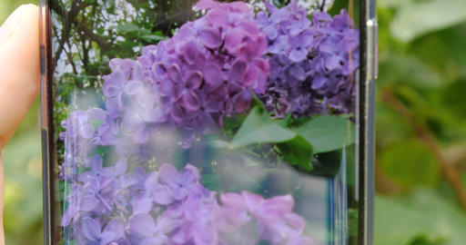 4K - Person shoots a lilac on the camera phone close up Footage