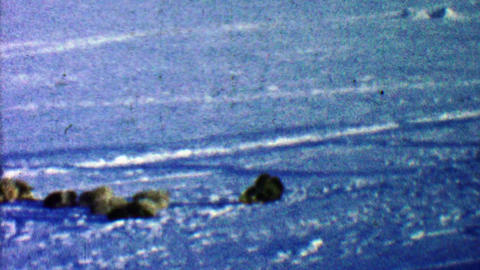 1957: Sled dogs resting after long day of pulling selfish human Footage
