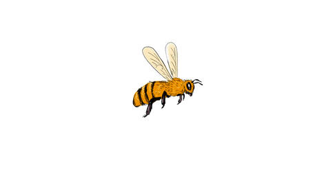 Bee Flying To Side Drawing 2D Animation Animation